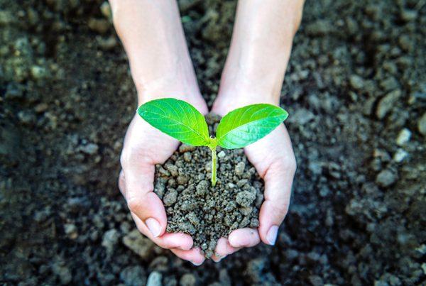 Sustainable Economic Growth